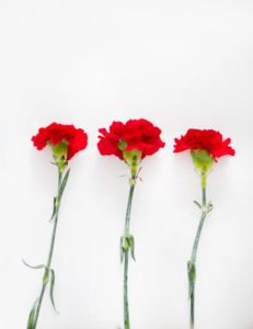 National Doctor's Day carnation
